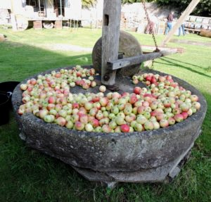 Orchard Harvest Day