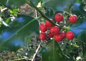 Lecture: The 12 Plants of Christmas
