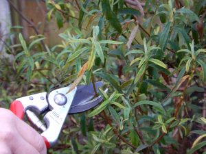 Lecture: Pruning