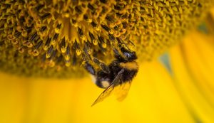 Lecture: Honey – from Flower to Jar